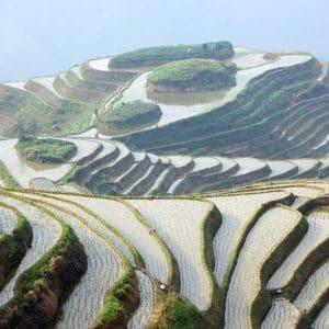Rijstpeeling of rijstpakking